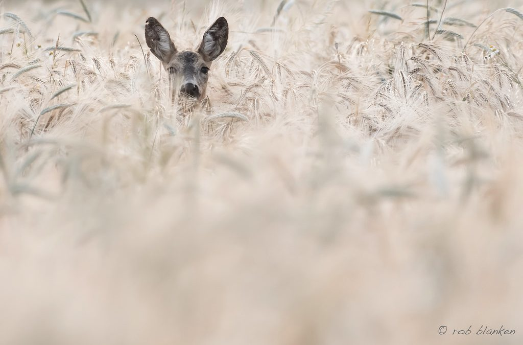 "Photo of the Day: ""Hello"" by Rob Blanken"