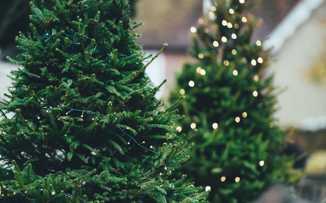 How to Buy a Christmas Tree. Yes, really.